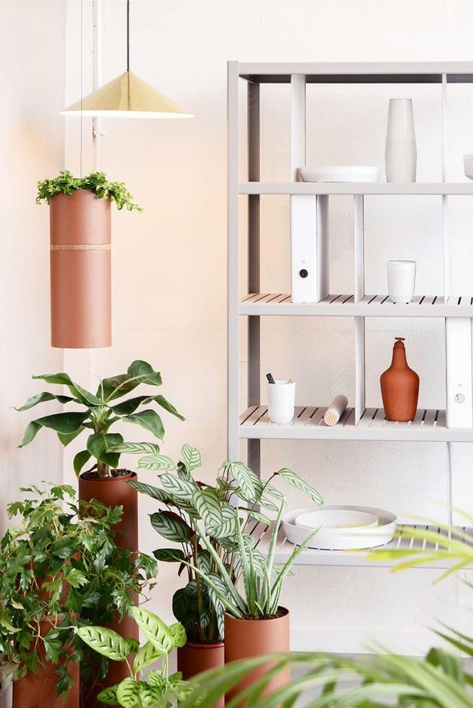 plant collectors p1010183