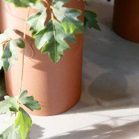plant collectors p1010629