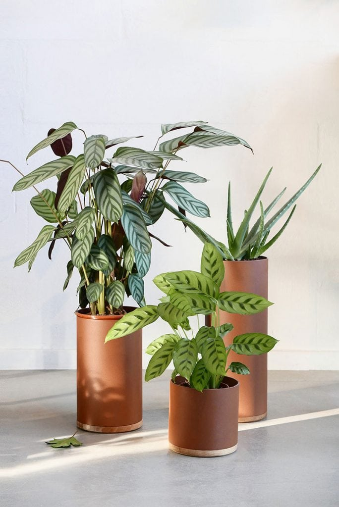 plant collectors p1010665