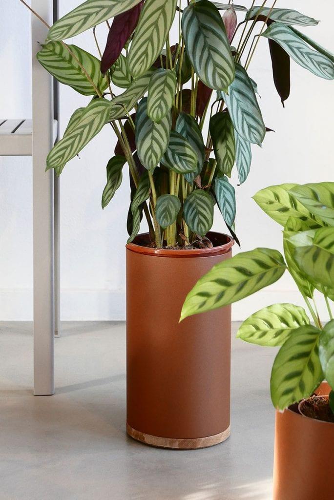 plant collectors p1010667